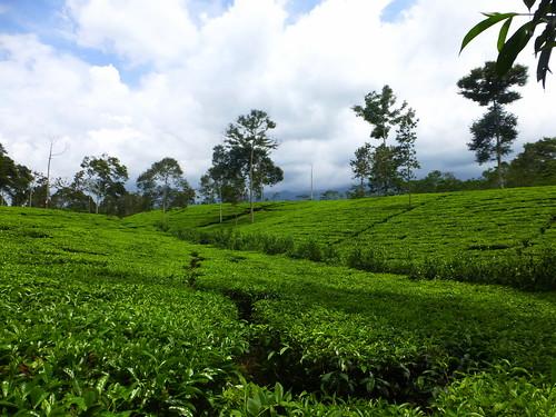 nature indonesia landscape dieng