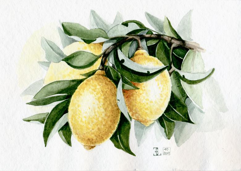 Lemons_2_780