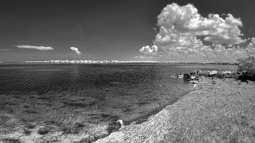 ocean sky panorama usa cloud bird beach water weather animal fauna tampa landscape ir unitedstates florida cloudy clear shore infrared features tarponsprings centralflorida edrosack