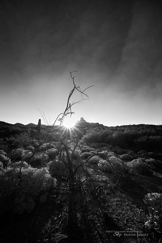 travel winter arizona cactus bw usa canada tree texture monochrome beautiful sunrise dawn butte unitedstates desert bare mesquite flare scottsdale fullframe 2014 carlzeiss fountainhills skimminglight canoneos6d thousandwordimages distagon1528ze dustinabbott dustinabbottnet adobelightroom5 adobephotoshopcc alienskinexposure7 zeissdistagont2815mmze