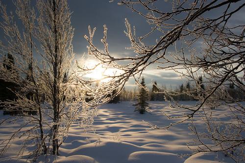 winter light sunset snow norway yddin