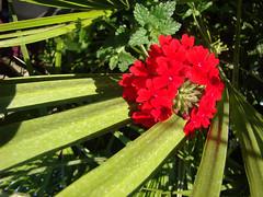 JARDINIERES & PLATES-BANDES fleuries.
