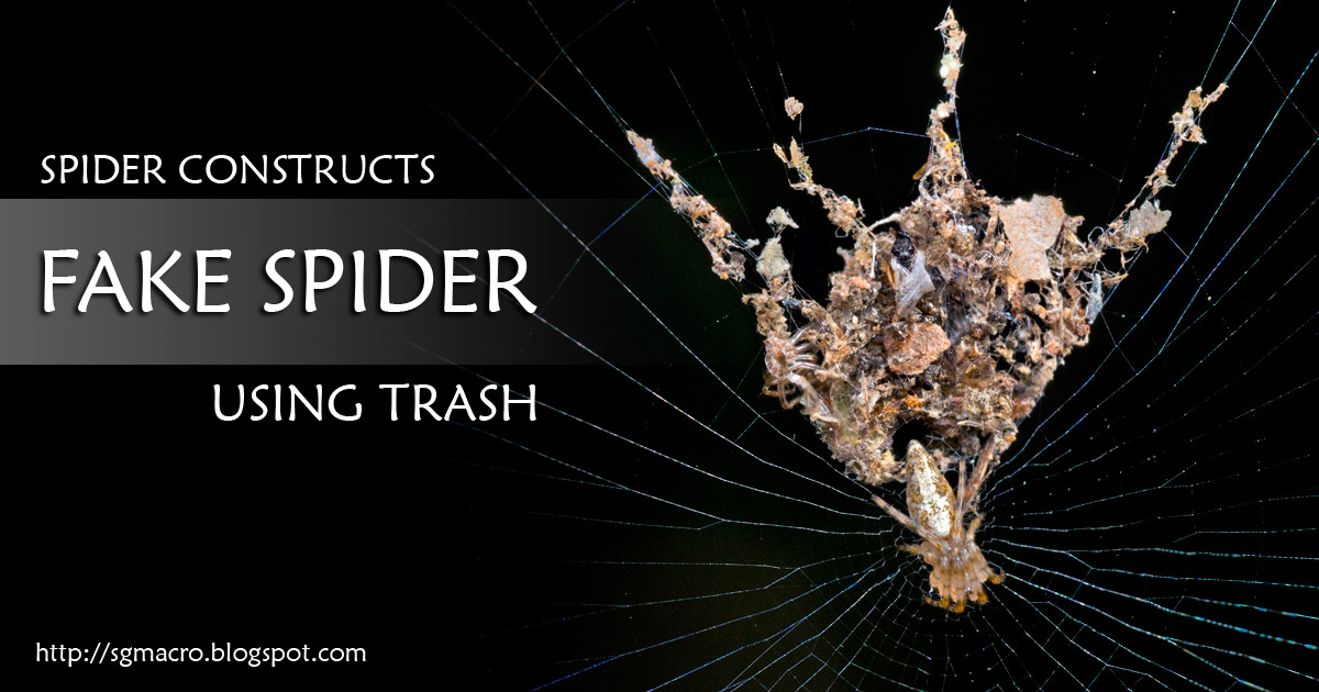 Spider Creates Fake Spider Using Trash