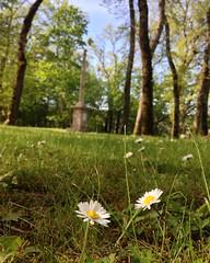 Au détour d'un parc #parcbuffon #montbard #cotedor #cotedortourisme #paquerettes #obelisque #parc