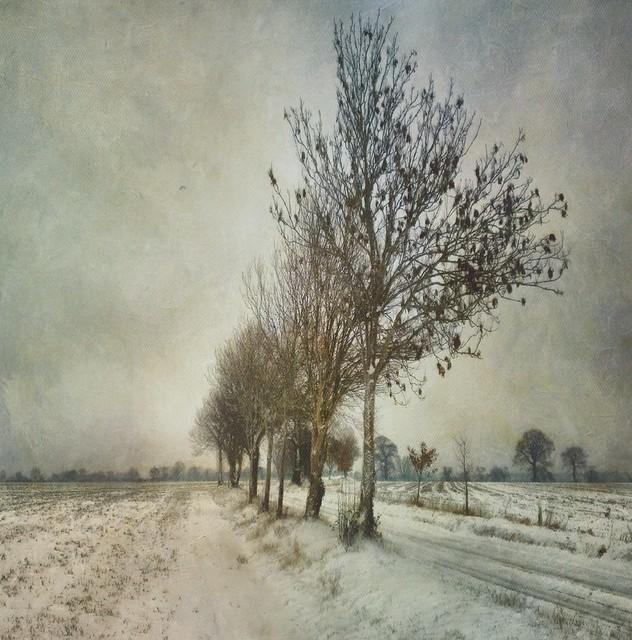 Sarah Jarrett - Slow Road to Winter