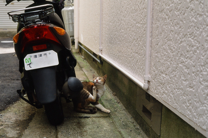cats on Yobuko life