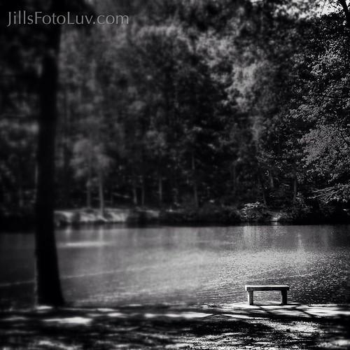 trees blackandwhite lake nature water bench outdoors blackwhite meditate view contemplate universityofrichmond
