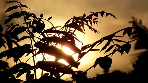sky orange cloud sun tree leaves rain clouds dawn evening coconut dusk horizon peeking yellowish gingery 1231231