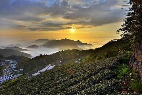 日落 風景 雲海 茶園 黃昏 雲瀑 隙頂