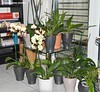 Orchid collection 1