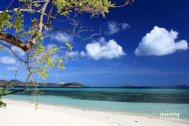 coconut palms at Malacapuya Island