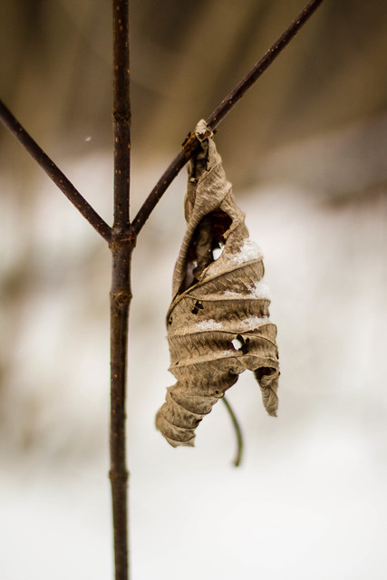 Une feuille escargot