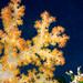 BeqaDive14.11.02-1-12 by Nick Hobgood - Amphibious photographer