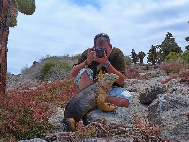 Fotografiando una iguana en isla Plaza Sur (Galápagos)