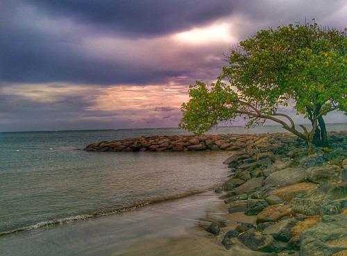 tree beach water clouds sand puertorico stones