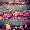 #autumn #leaves need raking. #ciderseason