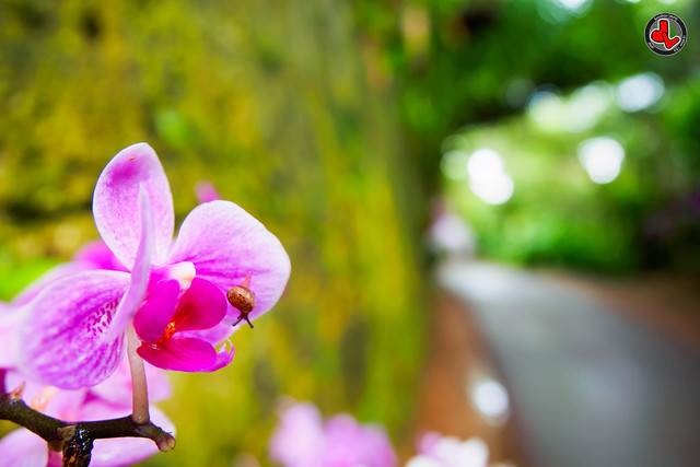 Photo:Orchid & Snail By jonathan.leung