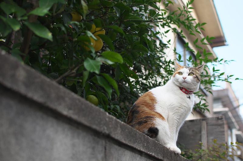 東京路地裏散歩 谷中・上野 2014年11月24日