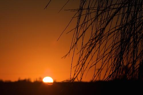 winter sunset sun tree tramonto
