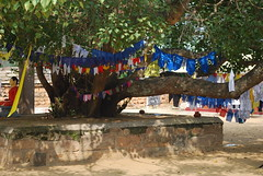 Sri Lanka, Bo Tree