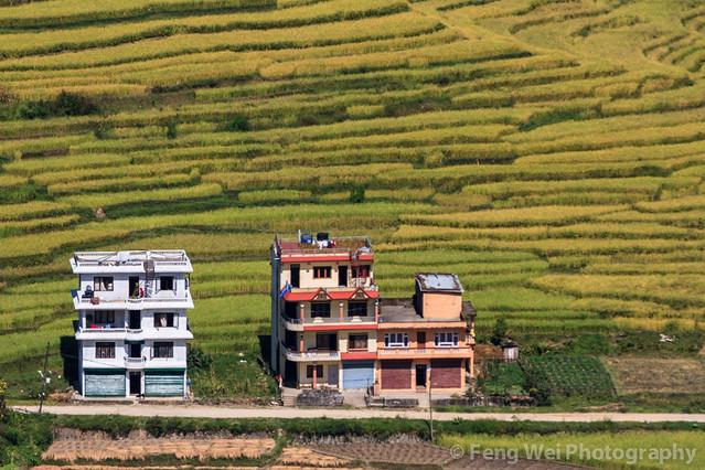 Village Houses By Terraced Fields, Nagarkot-ChanguNarayan trek, Nepal