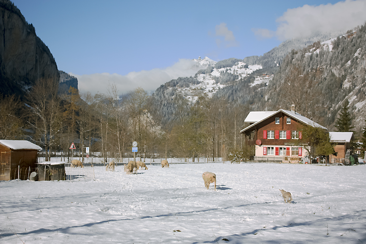 Lauterbrunnen, Switzerland, Snow, Winter, Travel, Bramble and Thorn