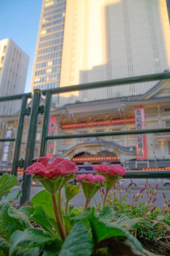 歌舞伎座 平成27年  壽初春大歌舞伎 初日