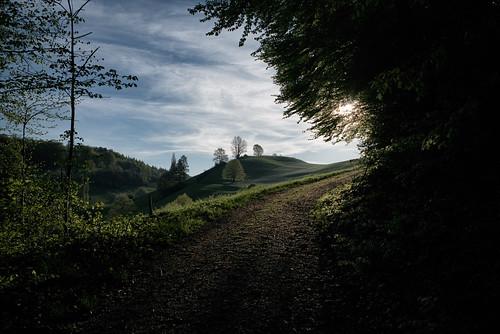 sun sunrise landscape schweiz switzerland spring europe suisse hiking 28mm rangefinder trail mp svizzera sonnenaufgang aargau frühling wanderung wanderweg randonnée 2016 svizra escursione leicam 160506 elmaritm niksoftware messsucher jurahöhenweg typ240 analogefexpro2 ©toniv m2404585 staffelegghauensteinbalsthal etappen34