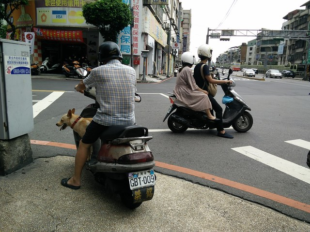 scooter dog in Yonghe