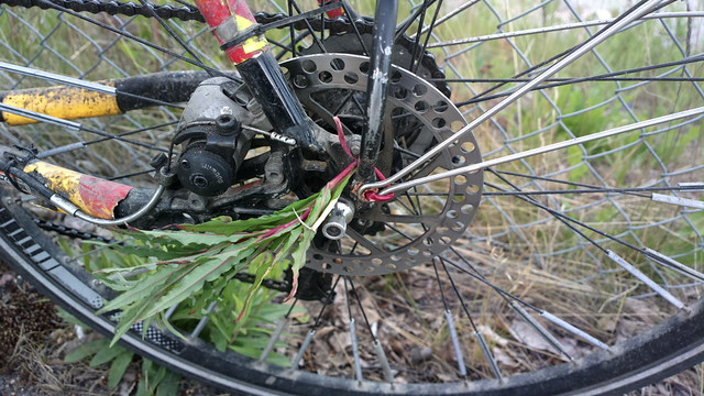 Bikehack: fixed a lost bolt with the stalk of a roadside weed