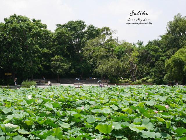 台北一日遊景點推薦植物園荷花蓮花池 (34)