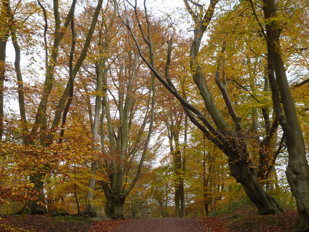 Beeches Epping 10