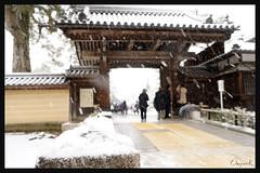 日本京都-金閣寺-雪.13