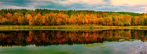 autumn trees canada clouds landscape 124 alberta drewmayphotography chickacoolake