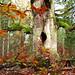 Magic November forest by RainerSchuetz