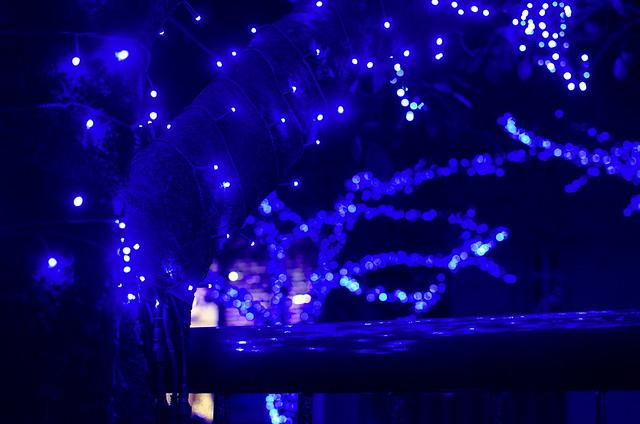 目黒川の青の洞窟 2014年11月23日