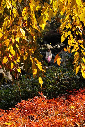 Autumn leaves of Shiratori-garden No.2.