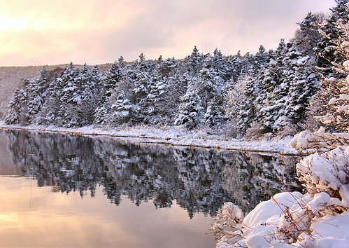 trees winter sunset snow water newfoundland landscape pond scenery scenic stjohns nfld longpond pippypark