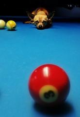 Bruno Plays Pool