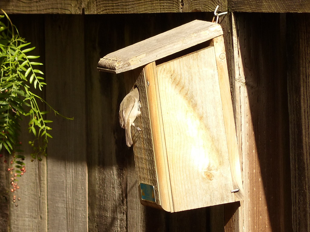 Oat Titmouse home inspection