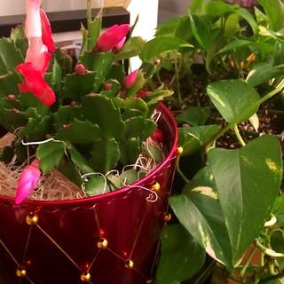 House Plant's Desert Mate
