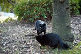 Two black cats in Mejo park 2015.01 No.1.
