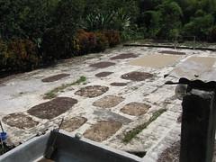 backyard, garden, flagstone, landscaping, road surface, flooring,