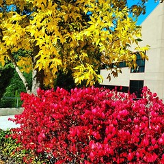 Fall at LWTech is breathtaking! Love that we are surrounded by trees of all sizes and colors. #fall4lwtech #back2school #autumn #leaves #pacificnorthwest #campus #college #kirkland