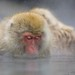 Japanese Macaque by Will Burrard-Lucas   Wildlife