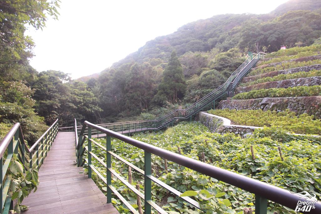 竹子湖青楓步道30