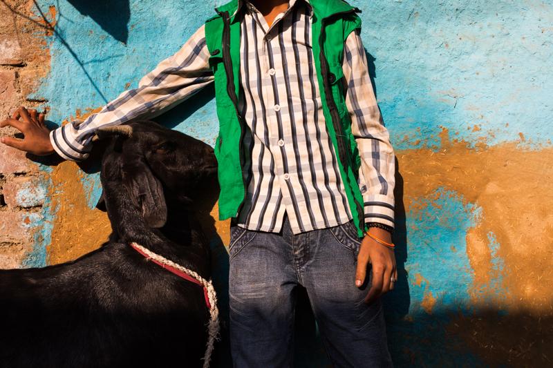 Portrait of a goat, Chitrakoot
