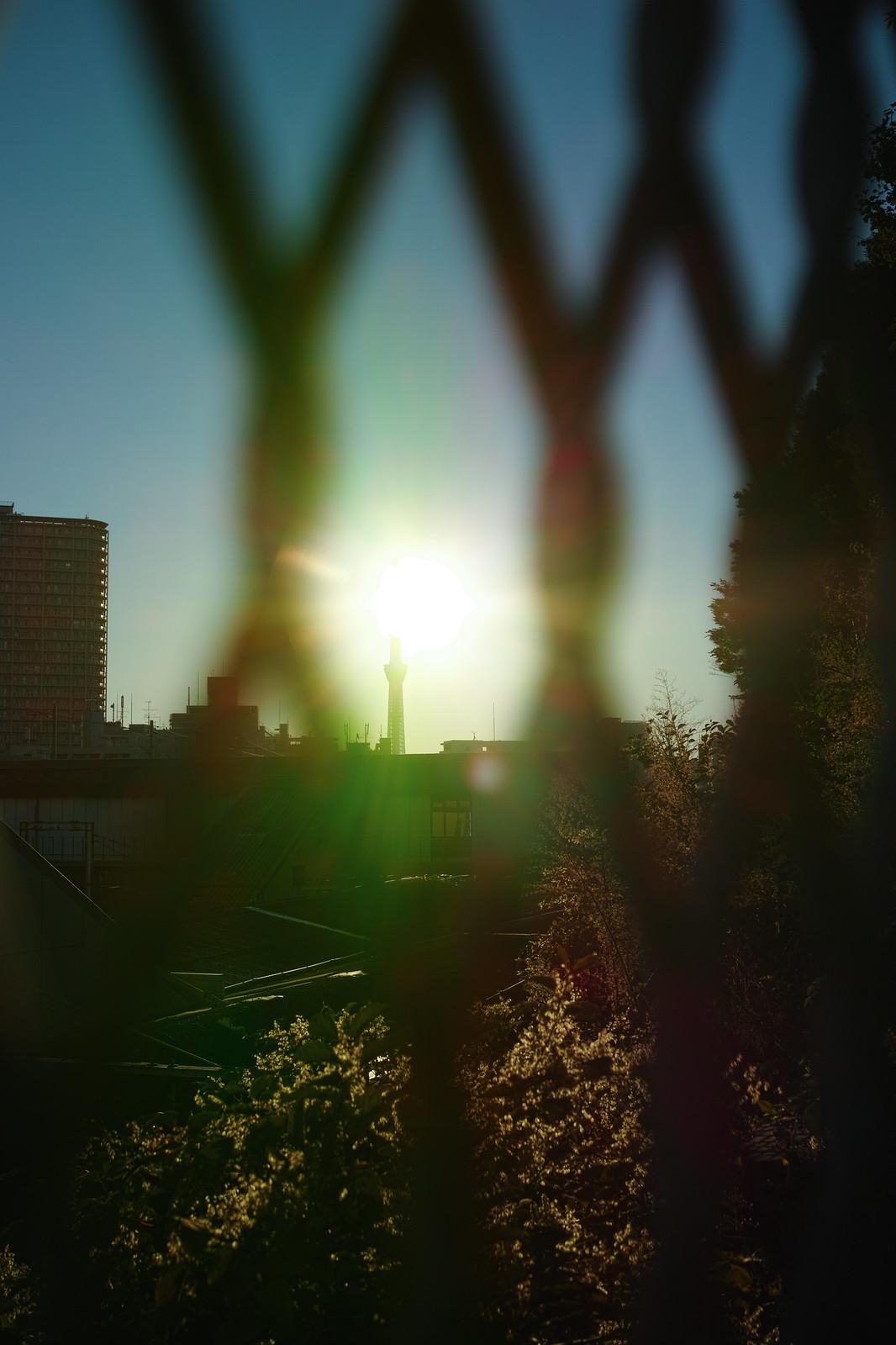 スカイツリーと朝日