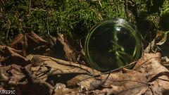 Crystal Wood II