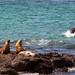 Wildlife of the Galapagos isles